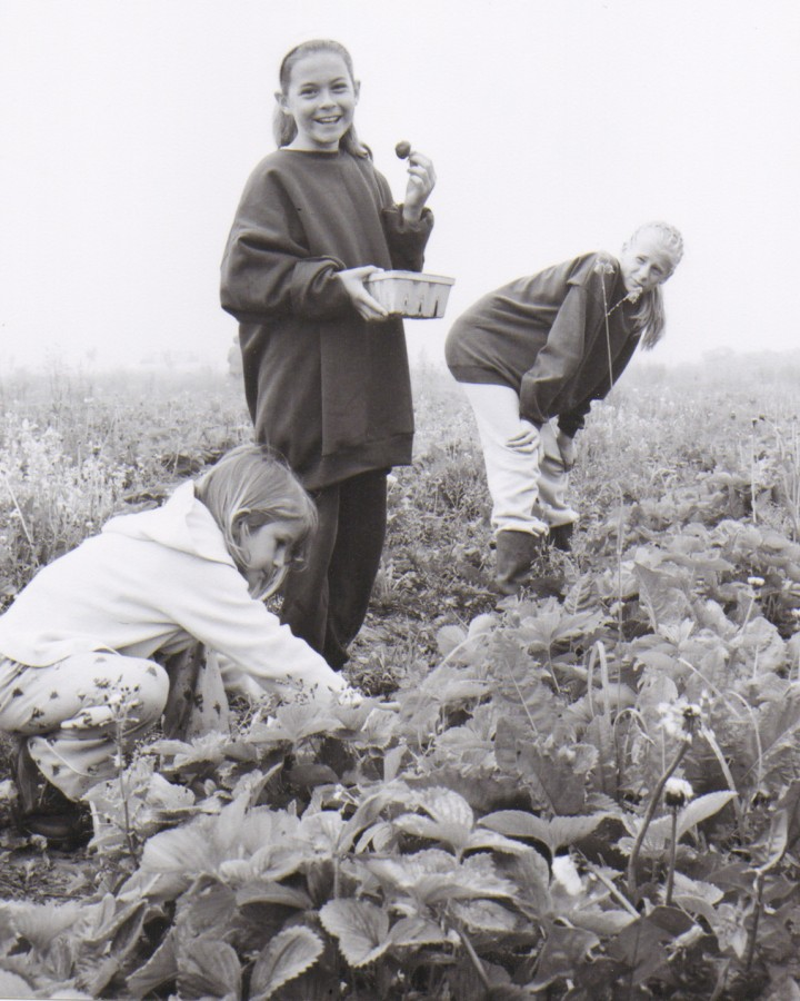 Harvesting Strawberries 3